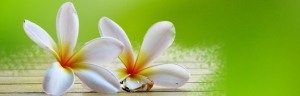 Image for our Beauty Salon: of two frangipani flowers on green background